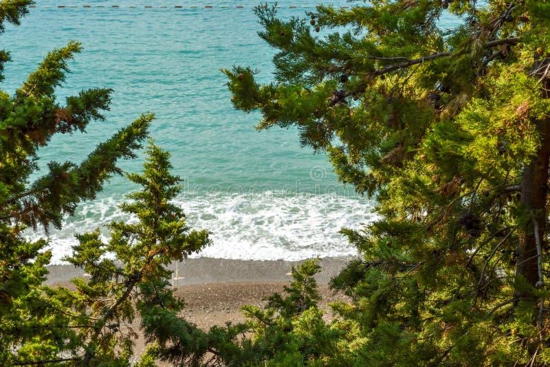 Widok morze od góry, dokąd sosny r Montenegro Budva Riviera Becici zdjęcia stock