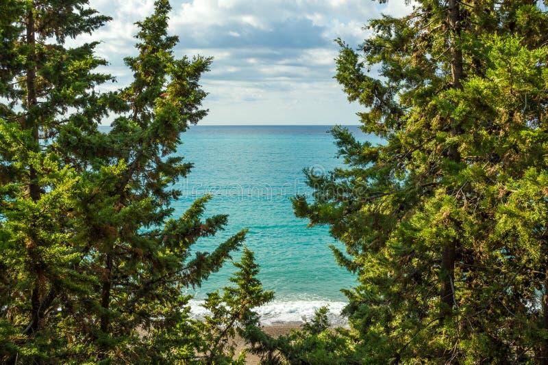Widok morze od góry, dokąd sosny r Montenegro Budva Riviera Becici obraz royalty free