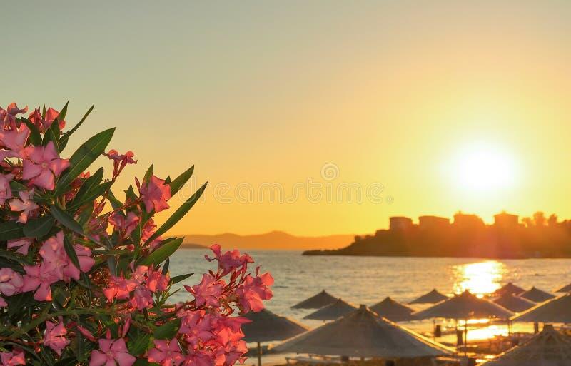 Widok morze otaczający kwiatami zmierzch i zdjęcia stock