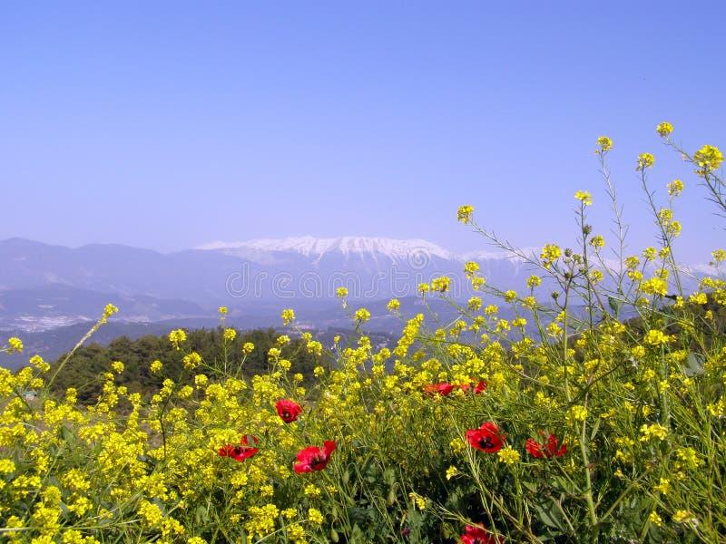 Widok na górach z śniegi zakrywającymi kwiatami blisko Antalya i szczytem fotografia royalty free