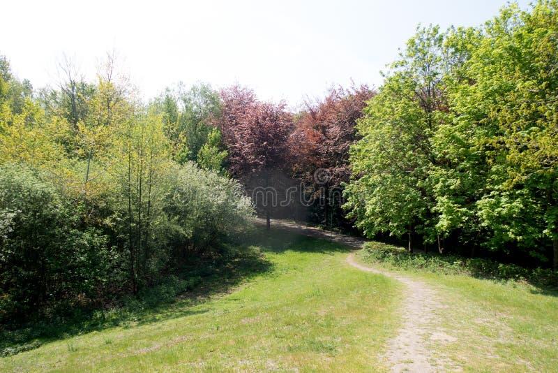 Widok na nożnej ścieżce przez lasu w geeste emsland Germany troszkę zdjęcia royalty free