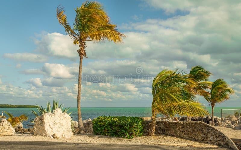 Widok Na Ocean Z drzewkami palmowymi, skały i Piękne chmury obraz royalty free