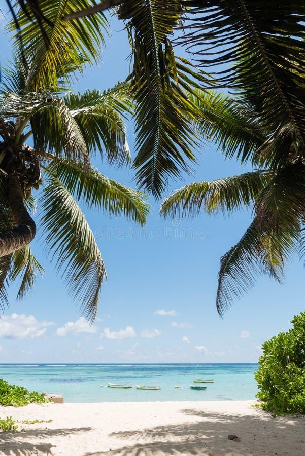 Widok na ocean z kokosowymi palmami i łodziami obraz stock
