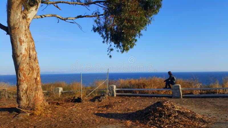 Widok na oceanie z drzewem i osobą w przodzie fotografia stock