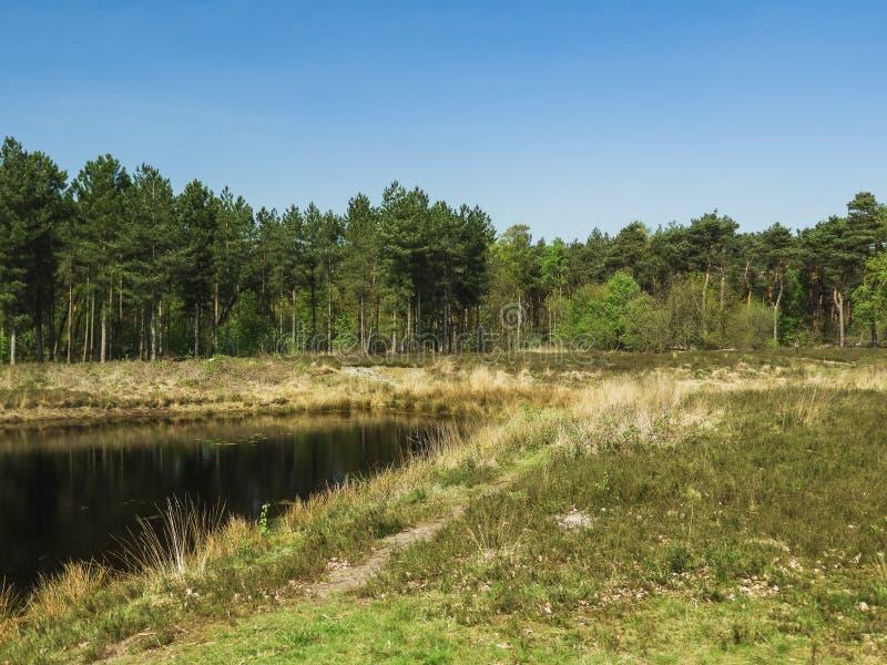 Widok na południowym Holenderskim lesie z jeziorem zdjęcie stock