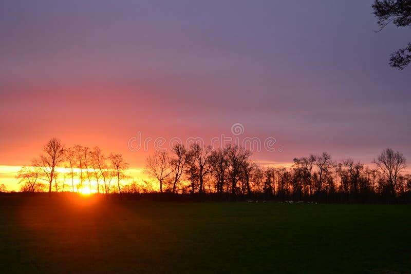 Widok na rolnicze tereny mleczarskie na wsi w Groningen w Holandii pod pięknym zachodem słońca obrazy stock