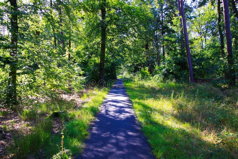 Widok na utwardzony tor rowerowy w gęsto zielonym lesie - Groote Heide w pobliżu Eindhoven, Holandia fotografia stock