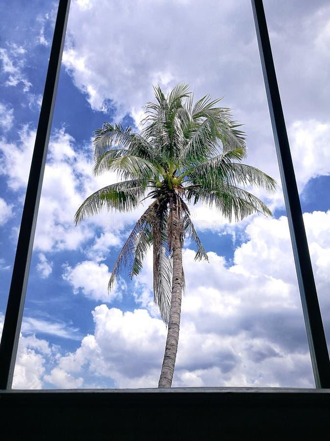 Widok na zewnątrz okno z kokosowymi drzewami, pięknym niebieskim niebem i chmurami, obrazy royalty free