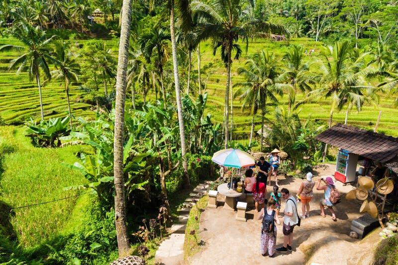Widok nad Tegallalang ryż tarasuje blisko Ubud, Bali, Indonezja obraz royalty free