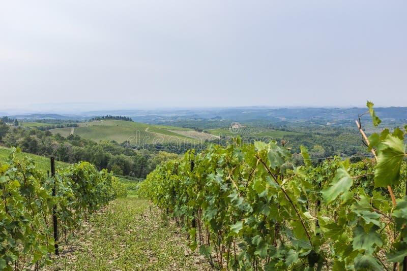 Widok nad wzgórzami z winnicami w pięknym Tuscany w Włochy zdjęcie stock