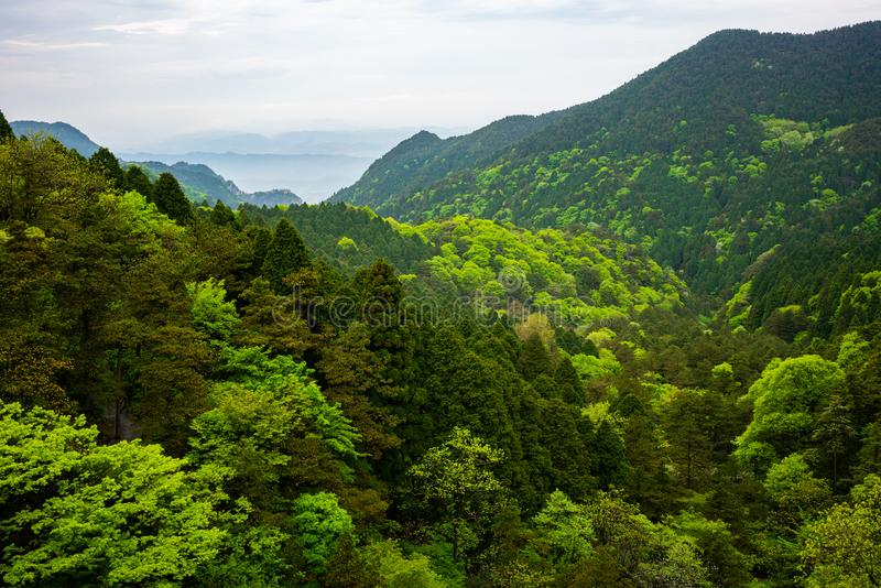 Widok nad zielonym lasem z różną kolorystyką w Lushan parka narodowego górach Jiangxi Chiny zdjęcie royalty free