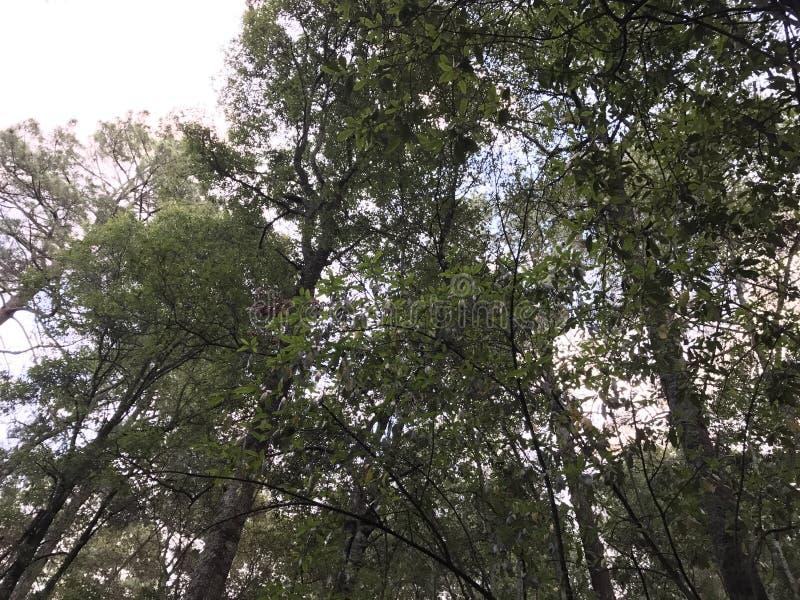Widok niebo od lasu, ogląda treetops zdjęcia stock