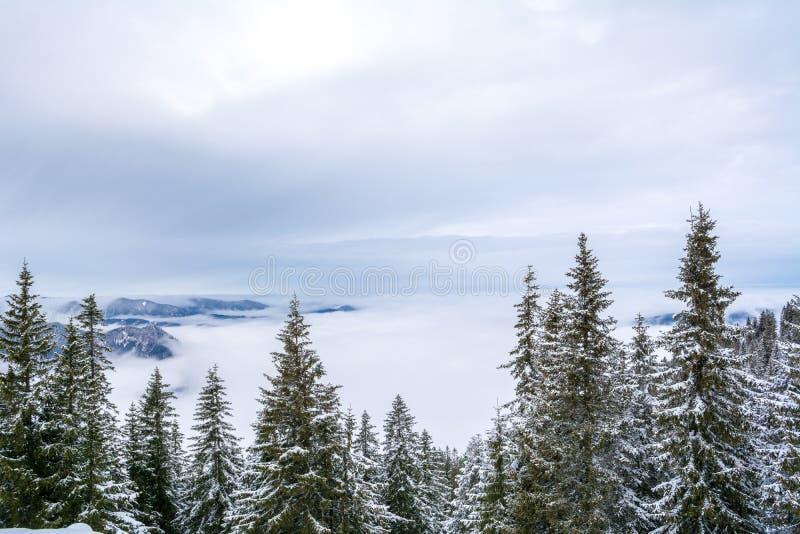 Widok od halnego odgórnego Wallberg zakrywającego z śniegiem na chmurnym dniu, Bawarscy Alps, Bavaria, Niemcy fotografia royalty free