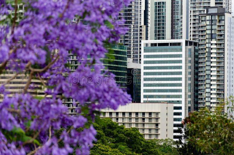 Widok od kangura punktu Brisbane miasta mieszkania obrazy stock