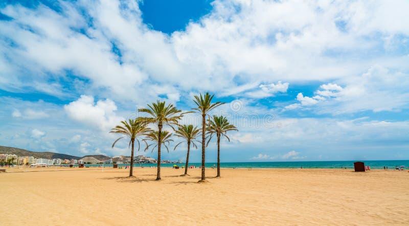 Widok od nadbrzeża przy morzem, drzewkami palmowymi i plażą w mieście Cullera, Okręg Walencja Hiszpania zdjęcia stock