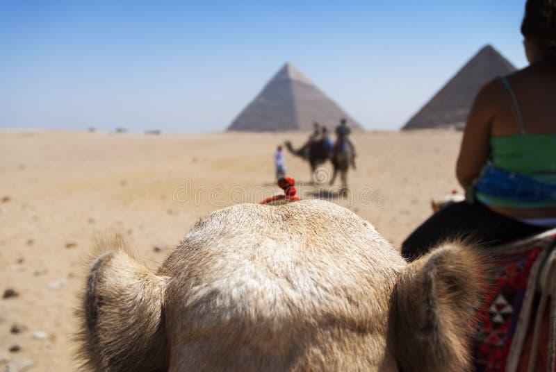 widok od wielbłąda, ostrosłupy Giza Kair Egipt fotografia stock