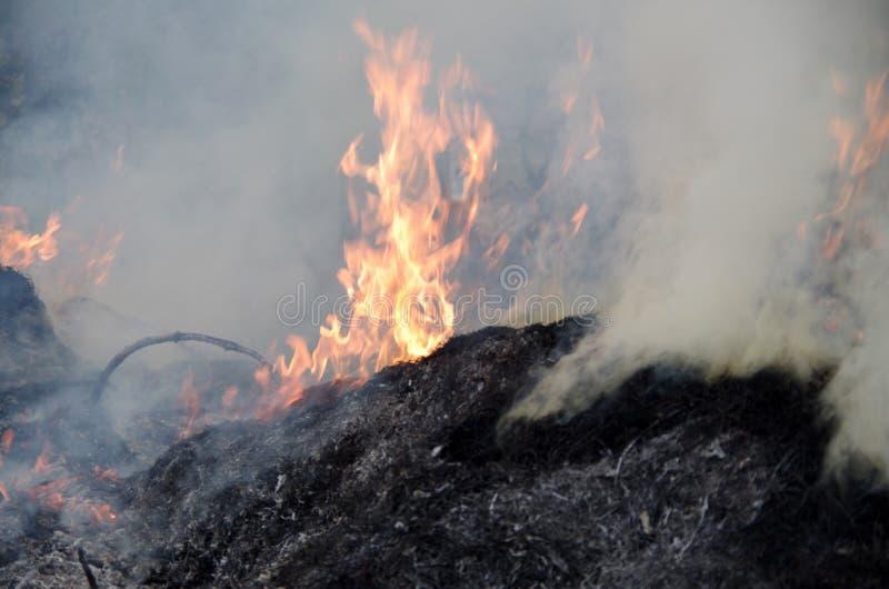 widok płomienie, dym i popióły, zdjęcia stock