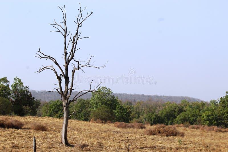 Widok pench park narodowy, madhyapradesh, ind, teren tigeress wymieniał langdi zdjęcie stock