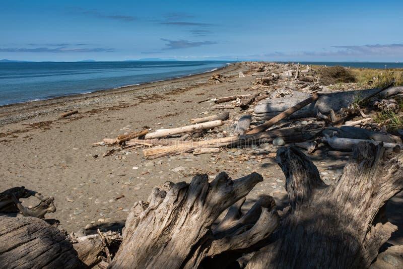 Widok piękna piaskowata plaża przez długich traw i patrzeć w dół długość plaża zdjęcie stock