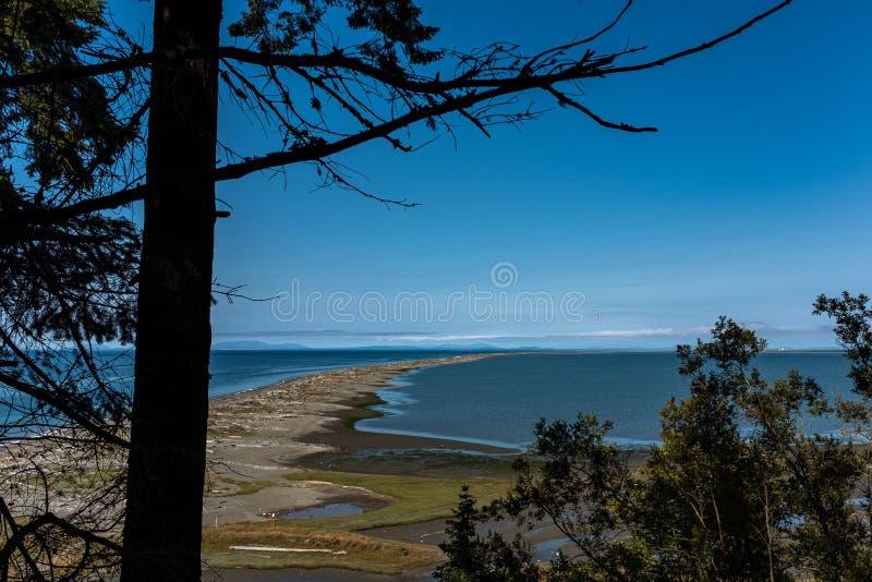 Widok piękna piaskowata plaża przez długich traw i patrzeć w dół długość plaża fotografia royalty free