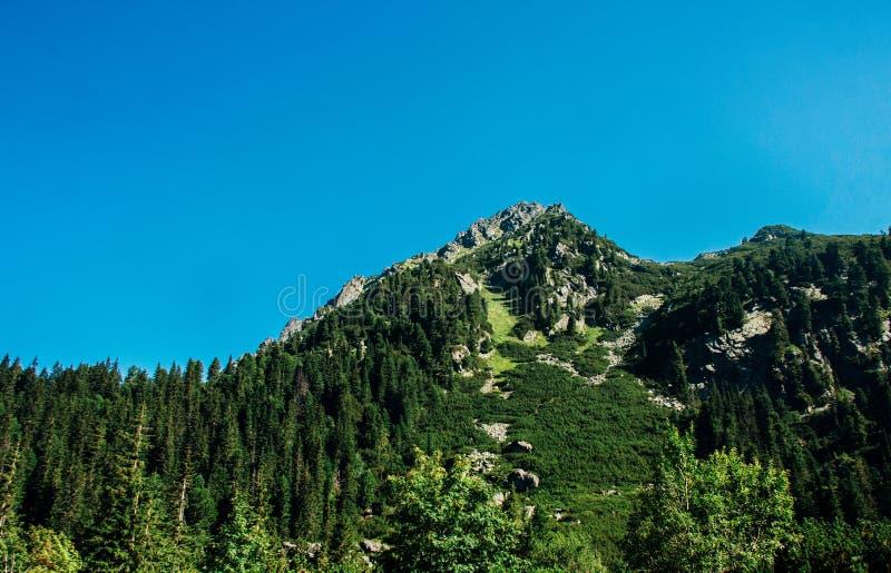 Widok piękne skały i las w lato górach obrazy stock