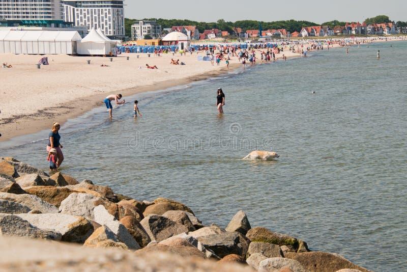 Widok plaża i morze z bielu psem w wodzie w miejscowości wypoczynkowej Warnemunde, Niemcy fotografia royalty free