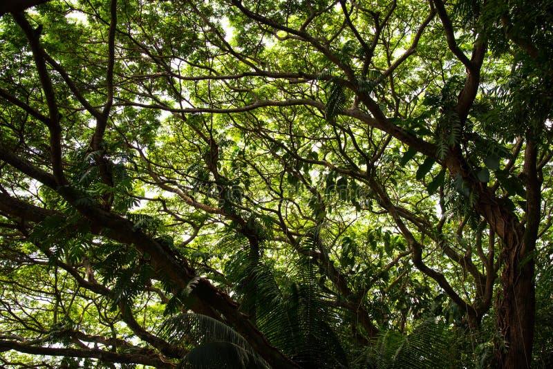 Widok pod drzewem fotografia royalty free