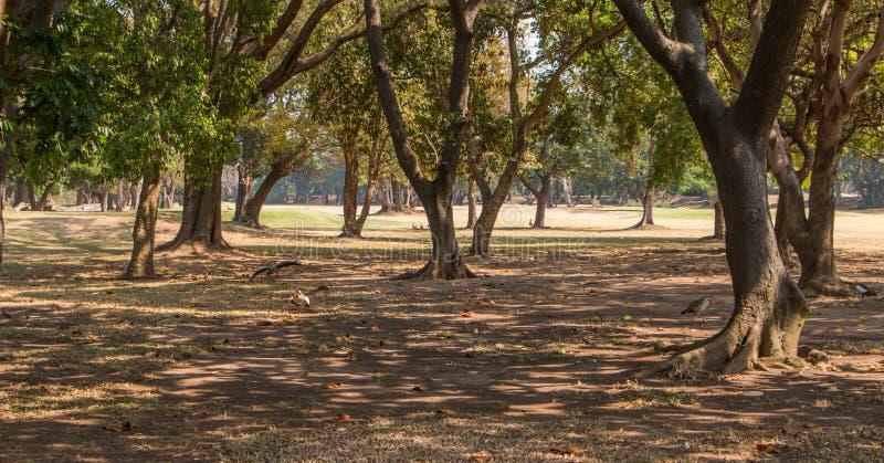 Widok przez drzew fotografia royalty free