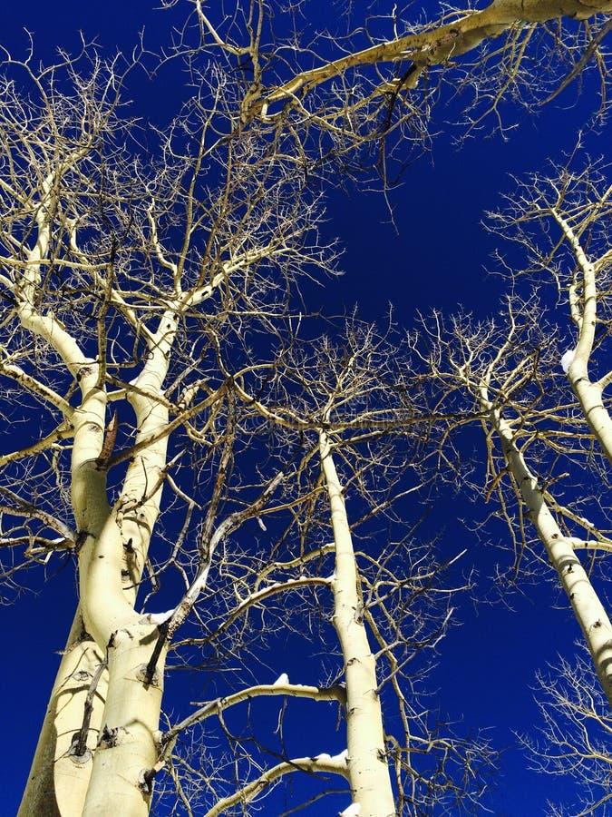 Widok przez drzew obrazy royalty free