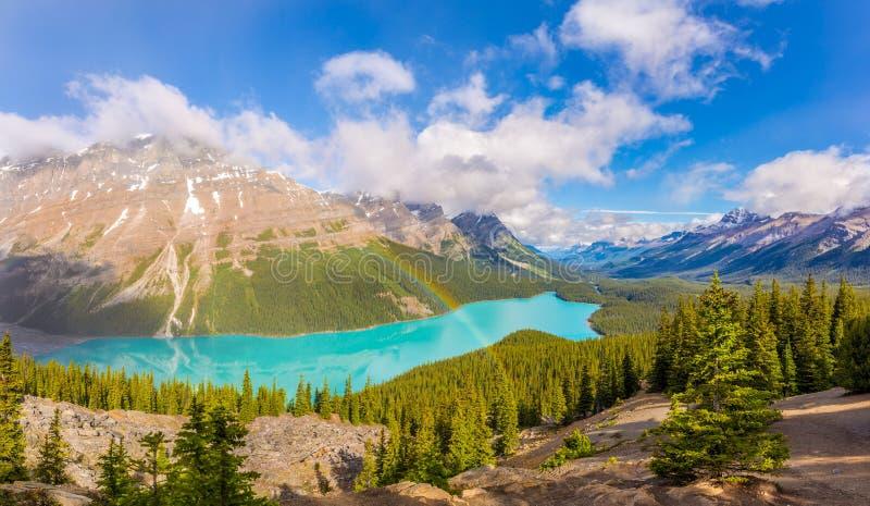 Widok przy Peyto jeziorem od łęku szczytu w Banff parku narodowym - Kanadyjskie Skaliste góry obrazy stock