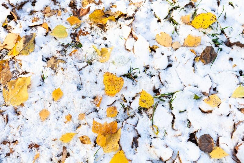 Widok różnorodni spadać liście na gazonie z śniegiem obrazy royalty free