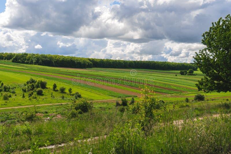 Widok Rolniczy pakuneczek i pola plantacja, zbierający, zielone pięty, grula zdjęcie royalty free