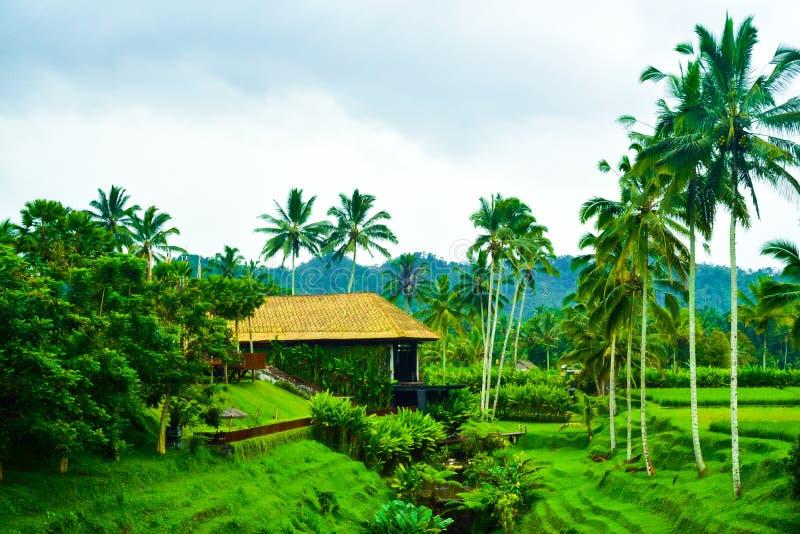 Widok romantyczni ryżu tarasu pola w chmurnym niebieskim niebie z świeżym ranku powietrzem obraz royalty free