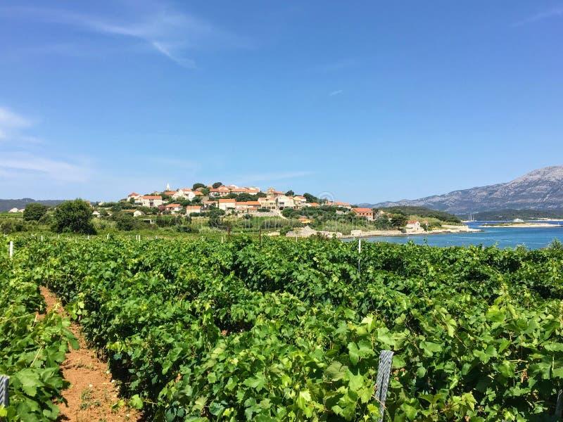 Widok rozkładać się wina winnica r lokalnych grk winogrona z miasteczkiem Lumbarda i adriatic morze obraz stock