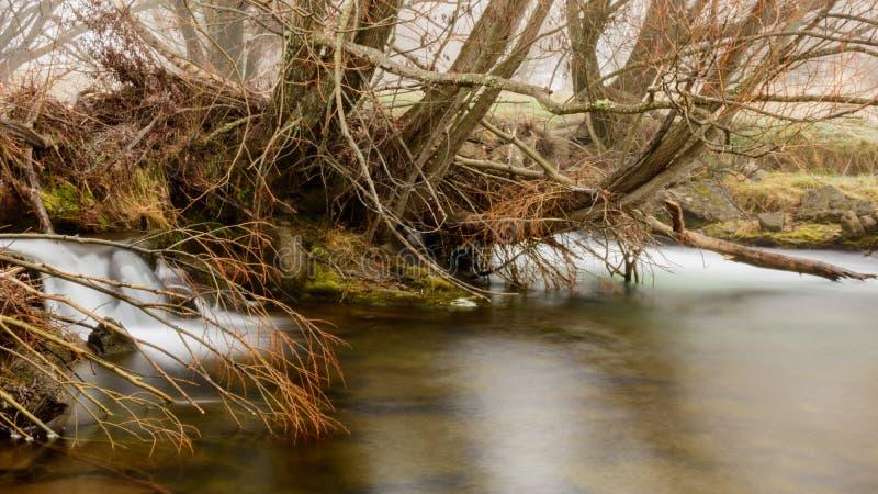 Widok rzeka w mgłowym dniu podczas zimy w Twizel zdjęcia stock