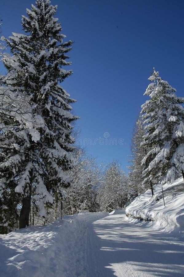 Widok sceniczny zima krajobraz w Bawarskich Alps fotografia stock