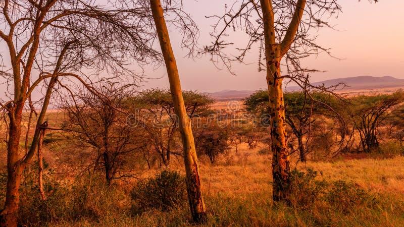 Widok Serengeti zdjęcia stock