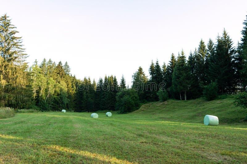 Widok skoszony pole na którym zawijają w celofanie bele siano zdjęcie royalty free