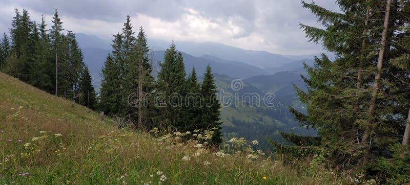 widok skrzyżowanie intermountain krajobrazu halnego regionu halnego Ukraine widok obraz royalty free