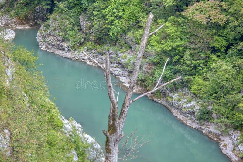 Widok Tara faleza i rzeka zdjęcie royalty free