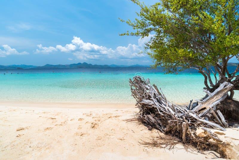 Widok tropikalna plaża na Bananowej wyspie, Busuanga, Palawan obrazy royalty free