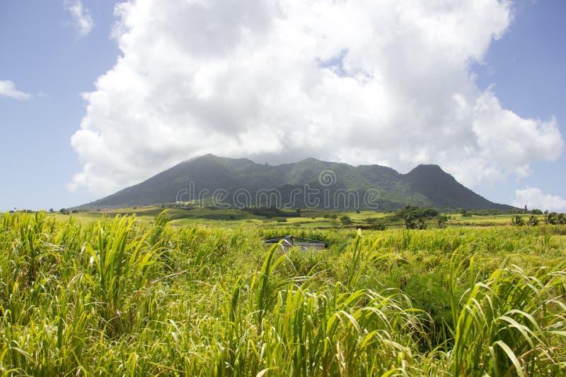 Trzcin Cukrowa pola Liamuiga & góra zdjęcie royalty free