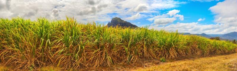 Widok trzcina cukrowa i góry Mauritius panorama fotografia royalty free