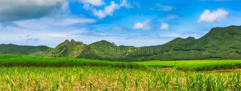 Widok trzcina cukrowa i góry Mauritius panorama obrazy stock