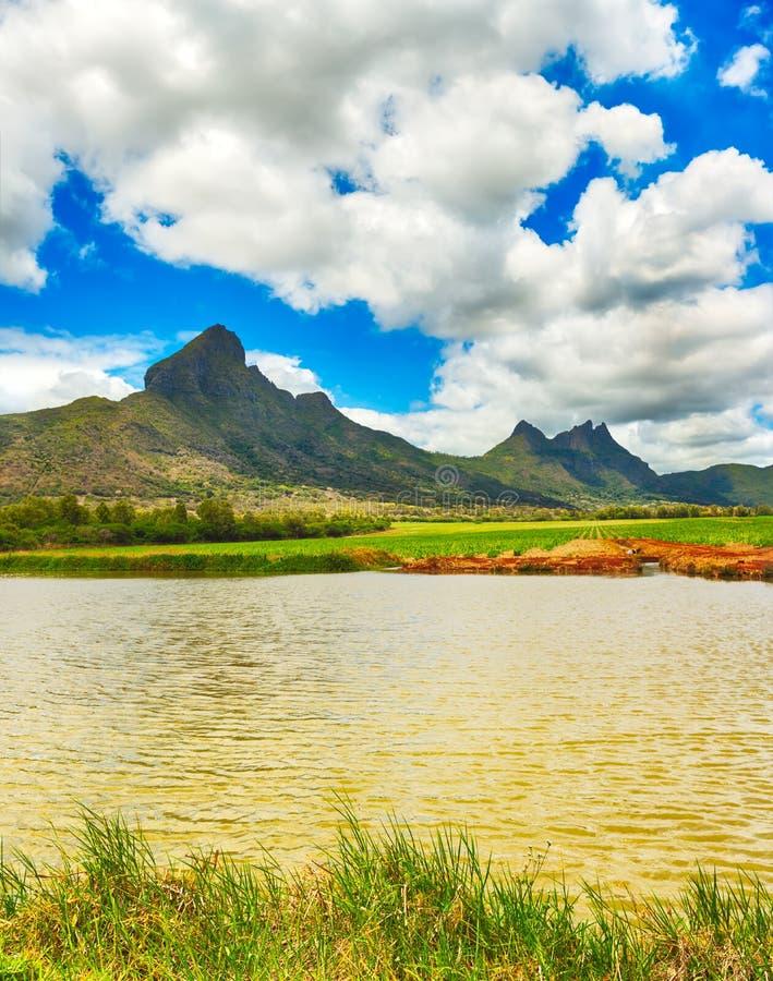 Widok trzcina cukrowa i góry Mauritius panorama fotografia stock