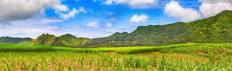 Widok trzcina cukrowa i góry Piękny krajobraz Mauritius panorama fotografia stock