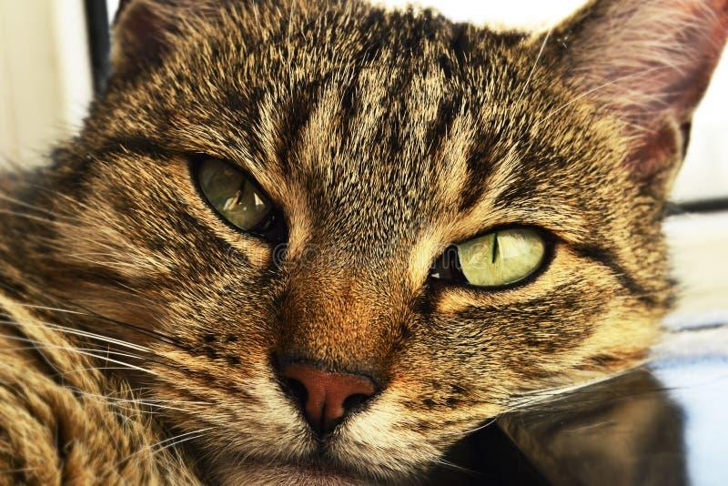 Widok twój zwierzę domowe kota odpoczywać zdjęcie stock