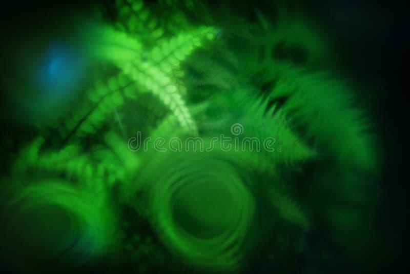 Widok w głębie nawiedzająca fontanna, zakrywać z szklanym talerzem dla ochrony, rosa kropel, świeżej zielonej paproci i mech, zdjęcie stock