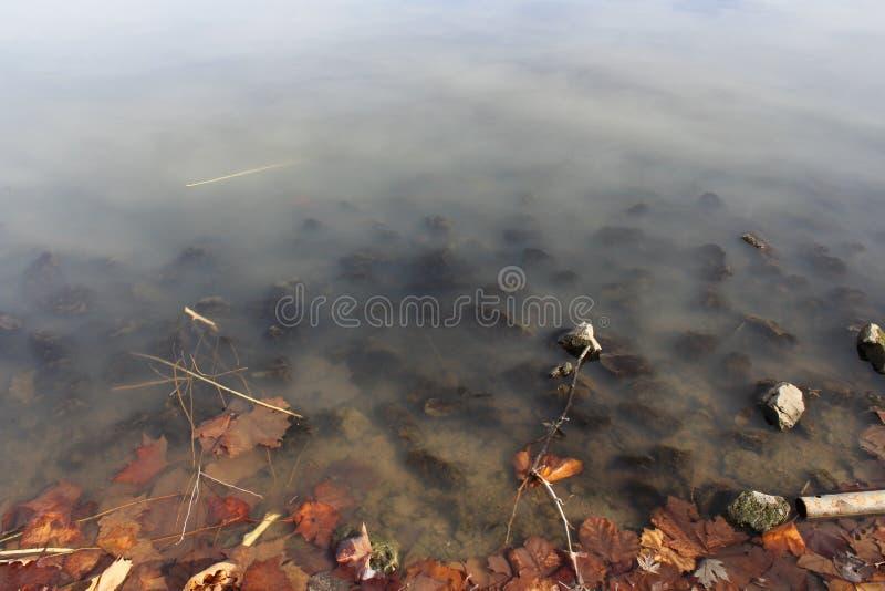 Widok w jezioro z zanurzającymi liśćmi i skałami zdjęcie stock