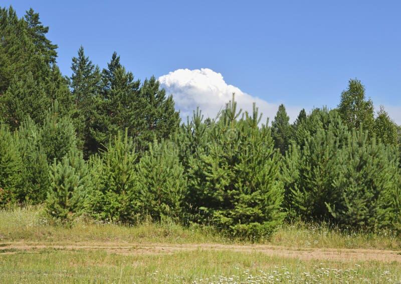 Widok wielka chmura zdjęcie stock
